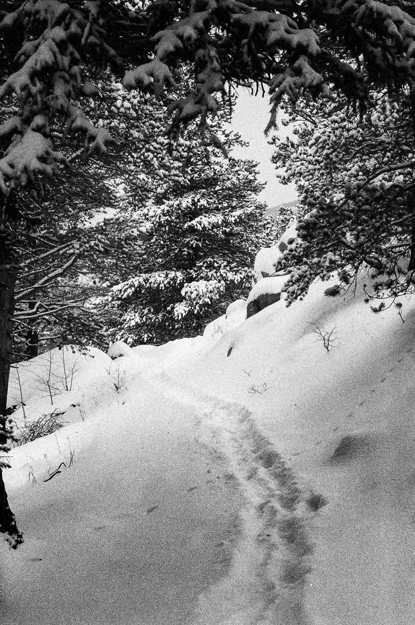 Tracks through the snow and bunny tracks going perpendicular across the trail. Lots of grain in the shadows of this film