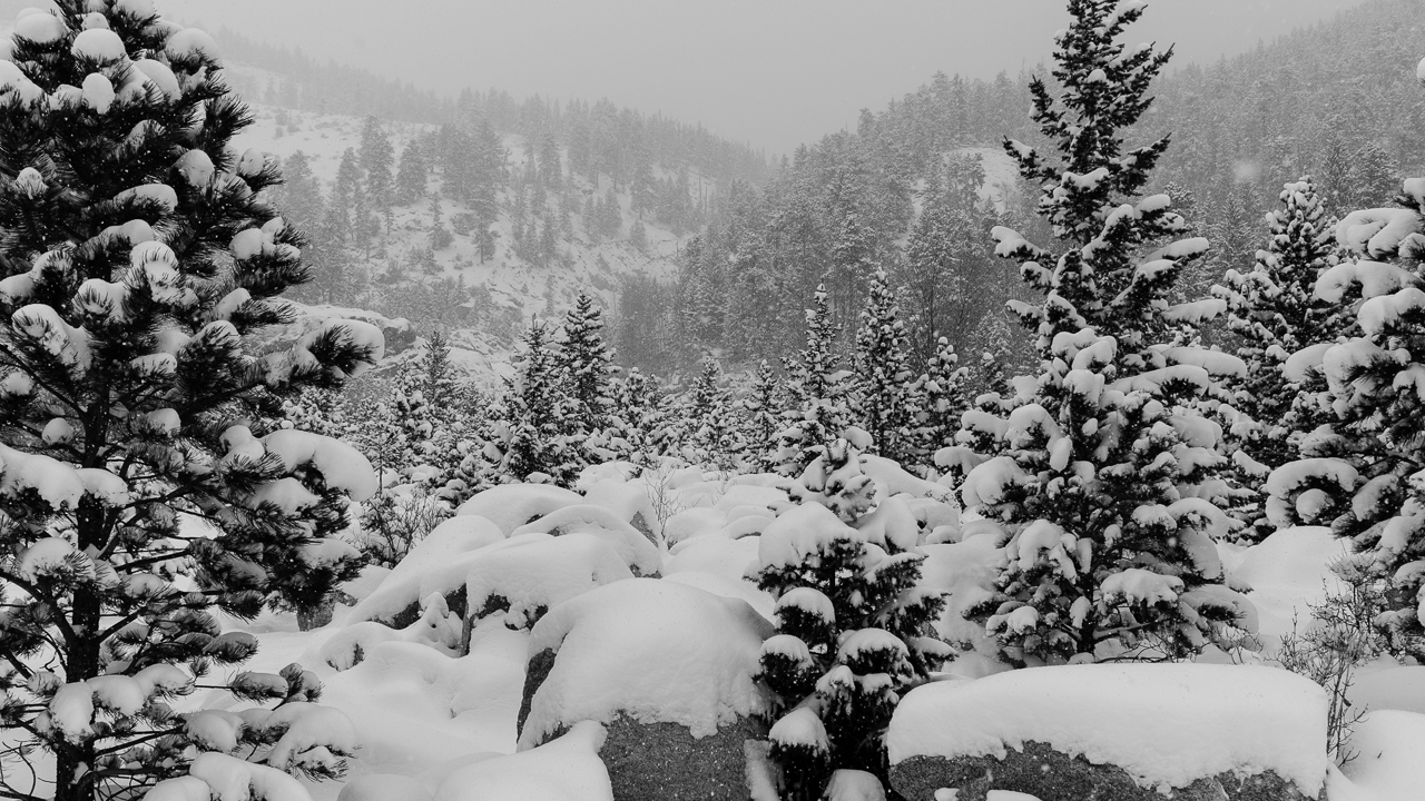 A snow storm covers the rocks and the trees at Alluvial Fan in Rocky Mountain Natiional Park.