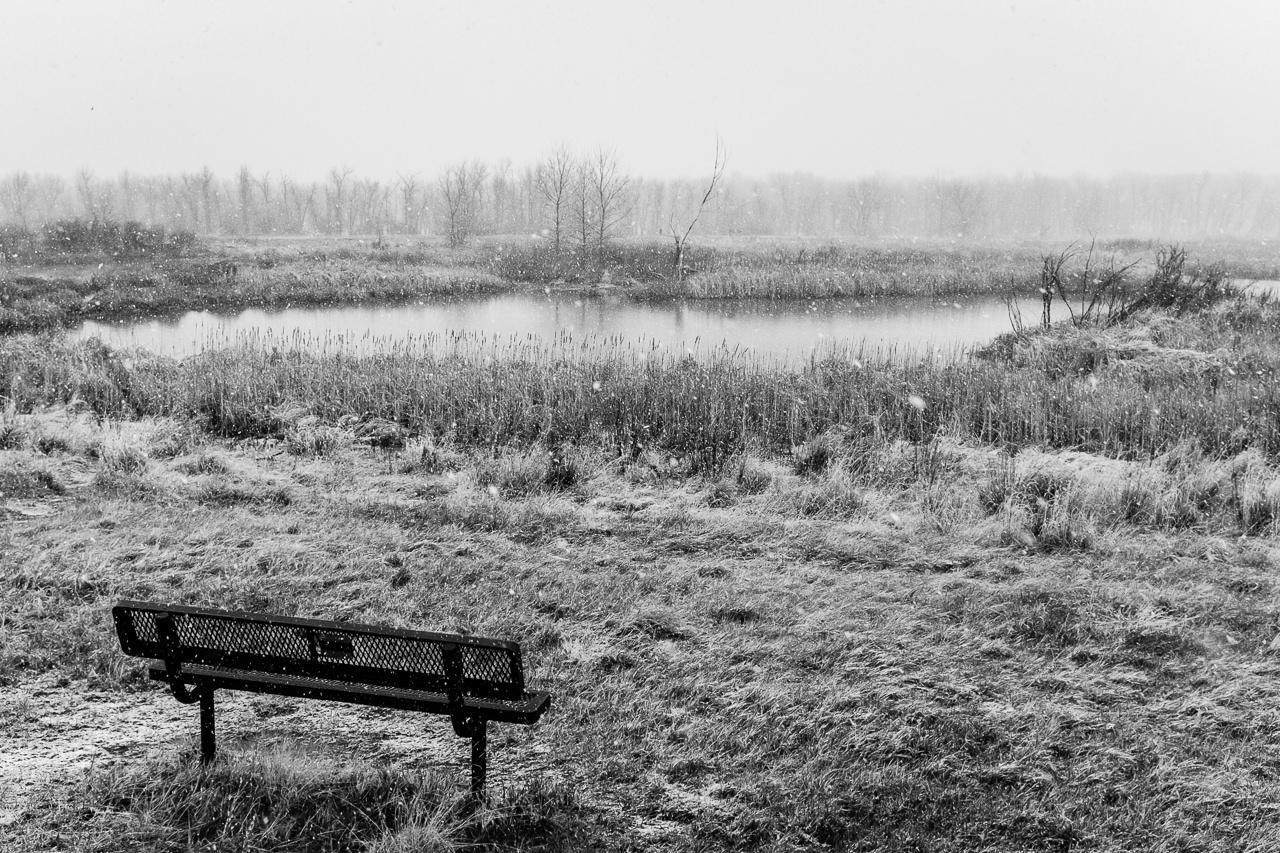 Day 103- 365 Day B&W Photo Challenge - Snow has started to fall at the Wetlands at Cherry Creek Reservoir. They are predicting this is another Bomb Cyclone storm here in Denver - Fuji X100F., Acros R Film Preset