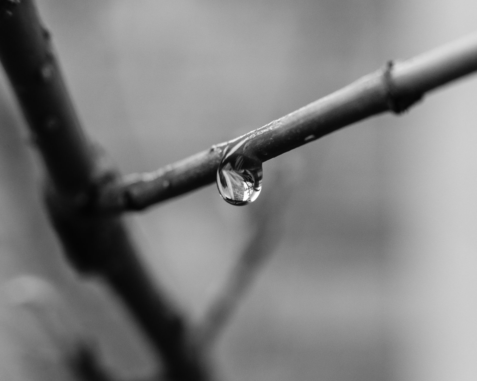 Day 130- 365 Day B&W Photo Challenge - Rain continues to fall here in the Denver area. - Fuji X-T3, MCEX-11 Extension Tube, XF 35mm f/2, Acros R Film Simulation