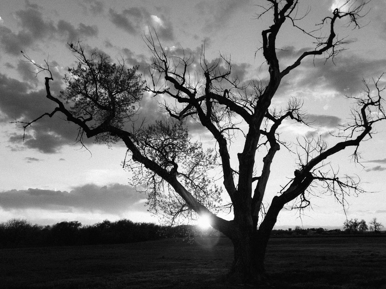 Day 136- 365 Day B&W Photo Challenge - Sunset near an old tree by the 17 Mile House - Google Pixel 3, VSCO Neopan 400 Film Simulation