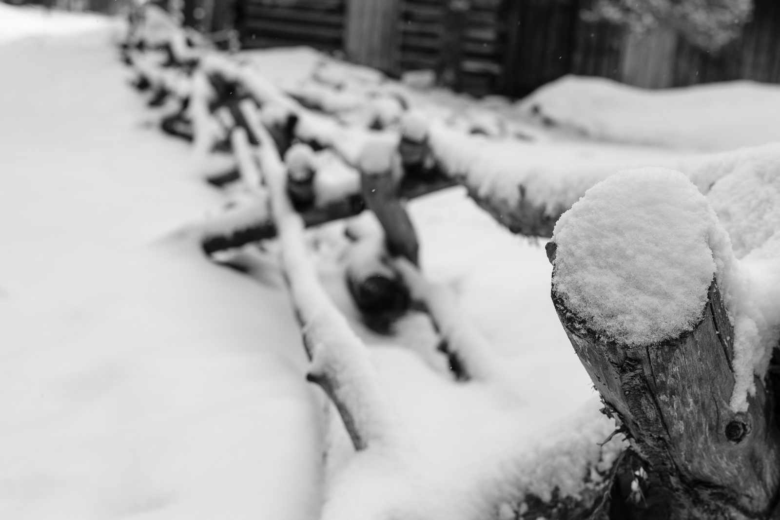 Day 145- 365 Day B&W Photo Challenge - Snow blanked Colorado again as shown here along a rural fence. -  Fuji X-T3, XF35mm f/2, Acros R Film Simulation