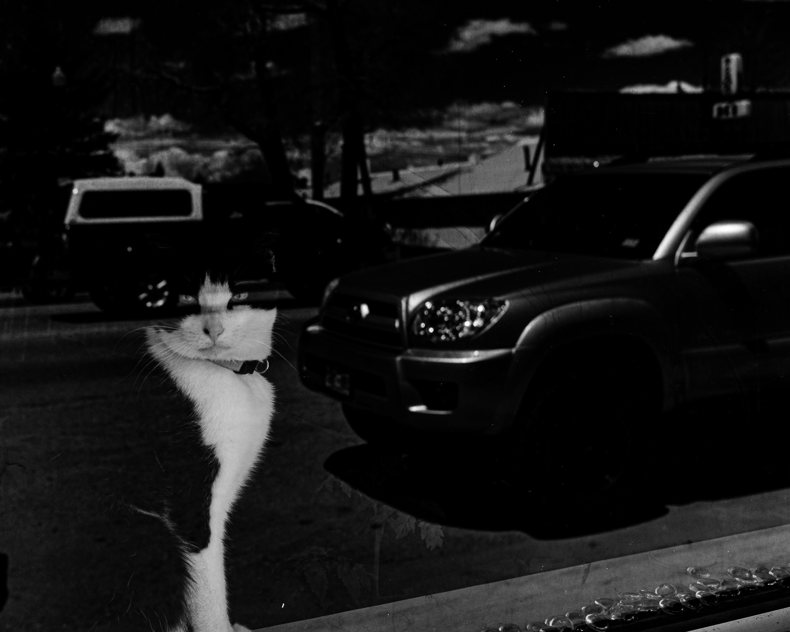Day 150- 365 Day B&W Photo Challenge - Cat peering out the window as traffic passes by in Walden, Colorado- Fuji X-T3, XF23mm f/2, Acros R Film Simulation
