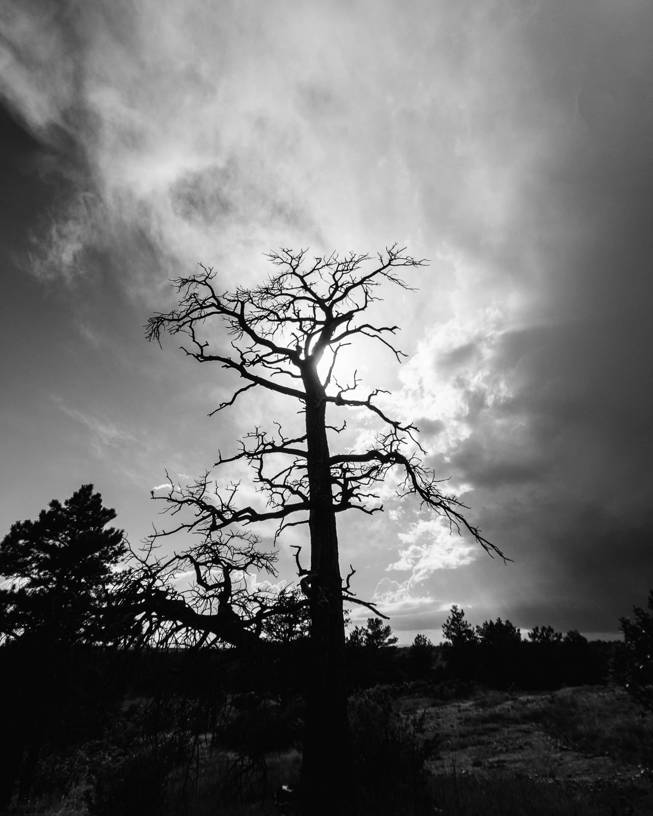 Day 166- 365 Day B&W Photo Challenge - A leafless tree reaches out to the sky, backlit by the afternoon storm clouds.. - Google Pixel 3, Moment Wide Lens, VSCO Fujifilm Neopan 400 Film Simulation
