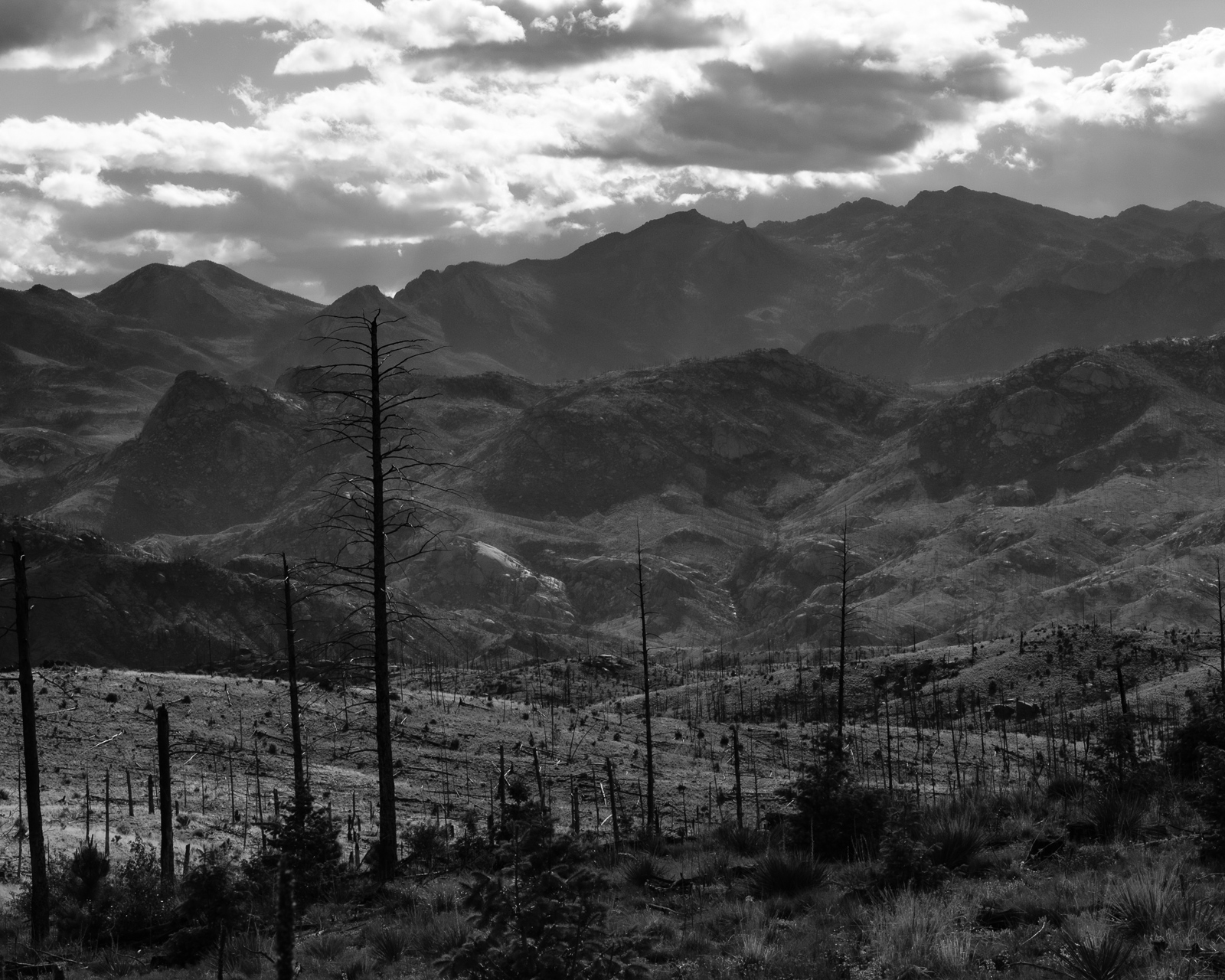Day 173 - 365 Day B&W Photo Challenge - Forest left charred from the Hayman Fires -  Fujifilm X-T3, Acros R Film Simulation
