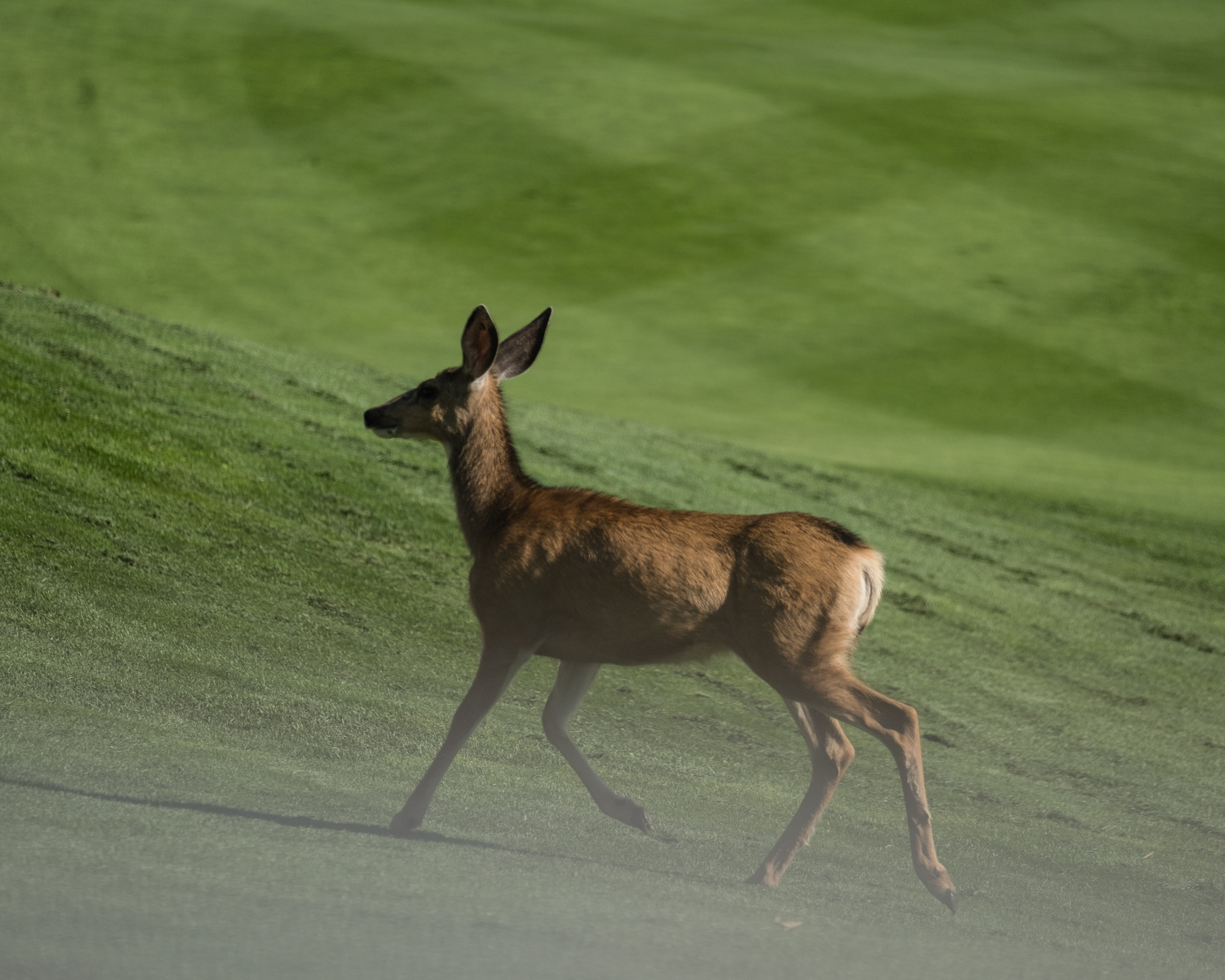 NKF Golf Classic 2019-35.jpg