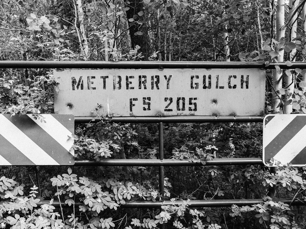 Day 189 - 365 Day B&W Photo Challenge - The Metberry Gulch Forest Service Road 205 sign- Google Pixel 3, VSCO Fujifilm Neopan 400 Film Simulation