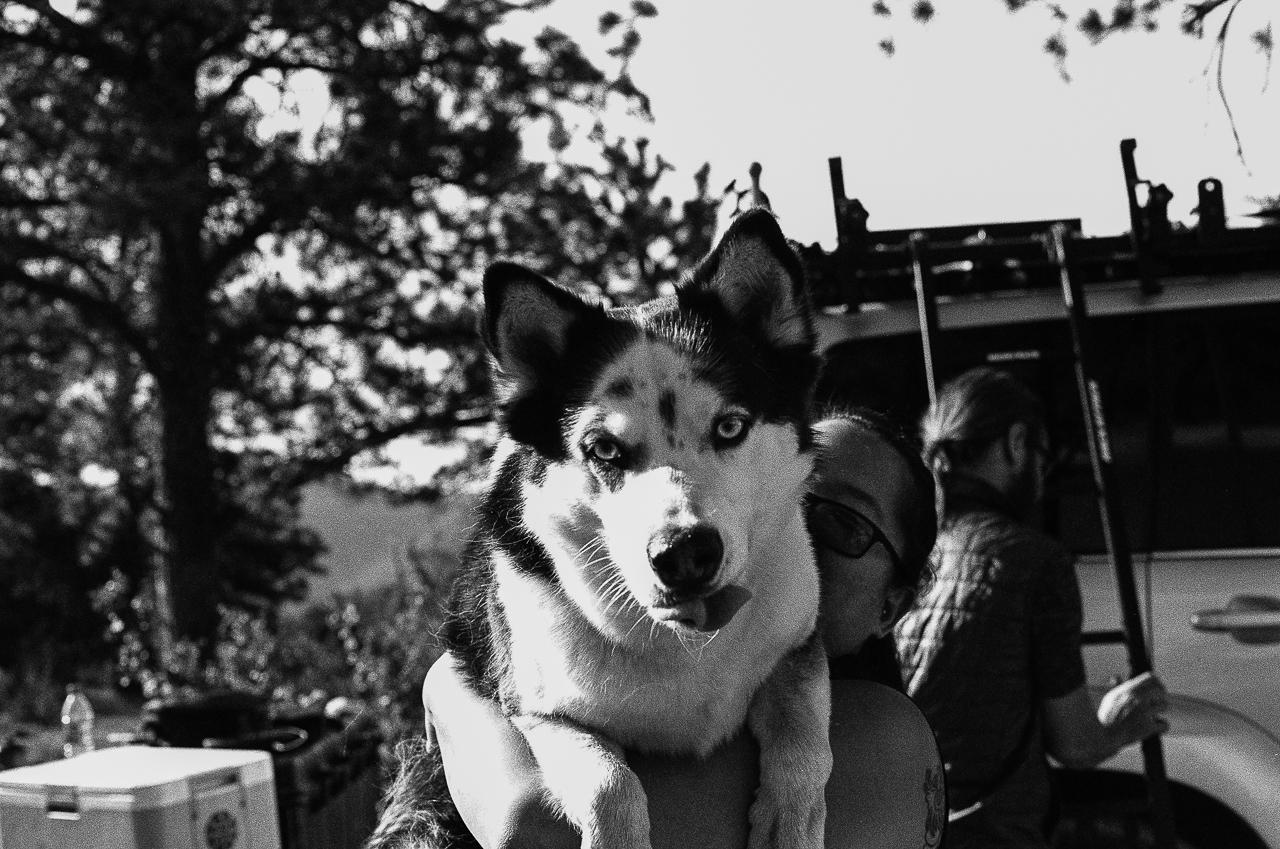 Day 193 - 365 Day B&W Photo Challenge - A big dog hug for the husky.  - Minolta X-700, Ilford HP5 Plus Film