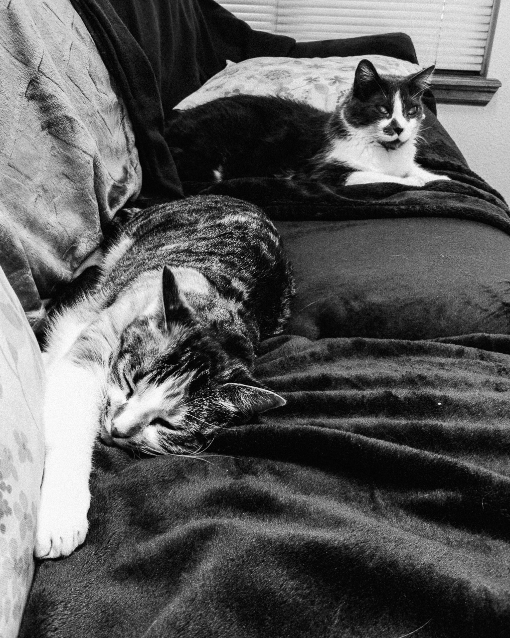 Day 201 - 365 Day B&W Photo Challenge - Cats have taken over the couch. - Google Pixel 3, Snapseed, VSCO Fujifilm Neopan 400 Film Simulation