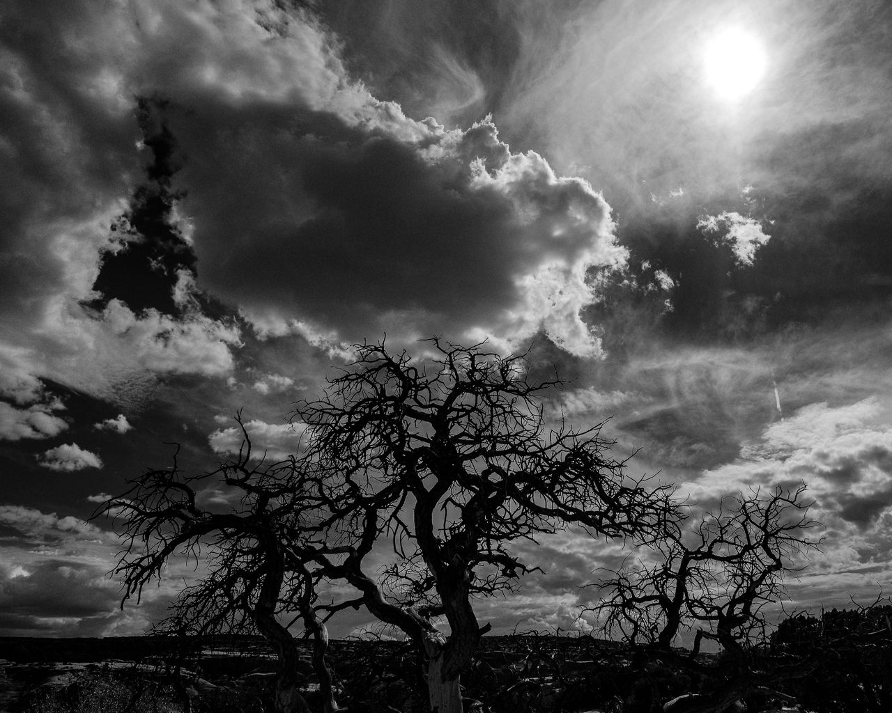 Day 218 - 365 Day B&W Photo Challenge - The mid-day desert sun hovers over the storm clouds and the struggling Pinon trees. - Fuji X-T3, XF 14mm f/2.8, Acros  R Film Simulation