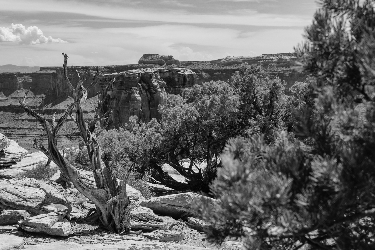 Day 215 - 365 Day B&W Photo Challenge - The pinon and junipers hightlight the rockformations in the desert southwest. - Fuji X-T3, XF 14mm f/2.8, Acros  R Film Simulation