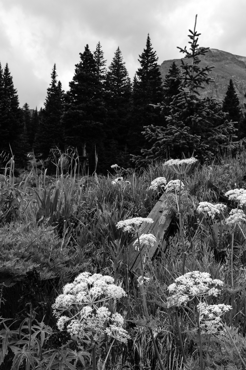 Day 224- 365 Day B&W Photo Challenge - Queen Anne's Lace covers the mountain landscapes in the San Juan Mountains of Colorado. - Fuji X-T3, XF 23mm f/2, Acros  R Film Simulation