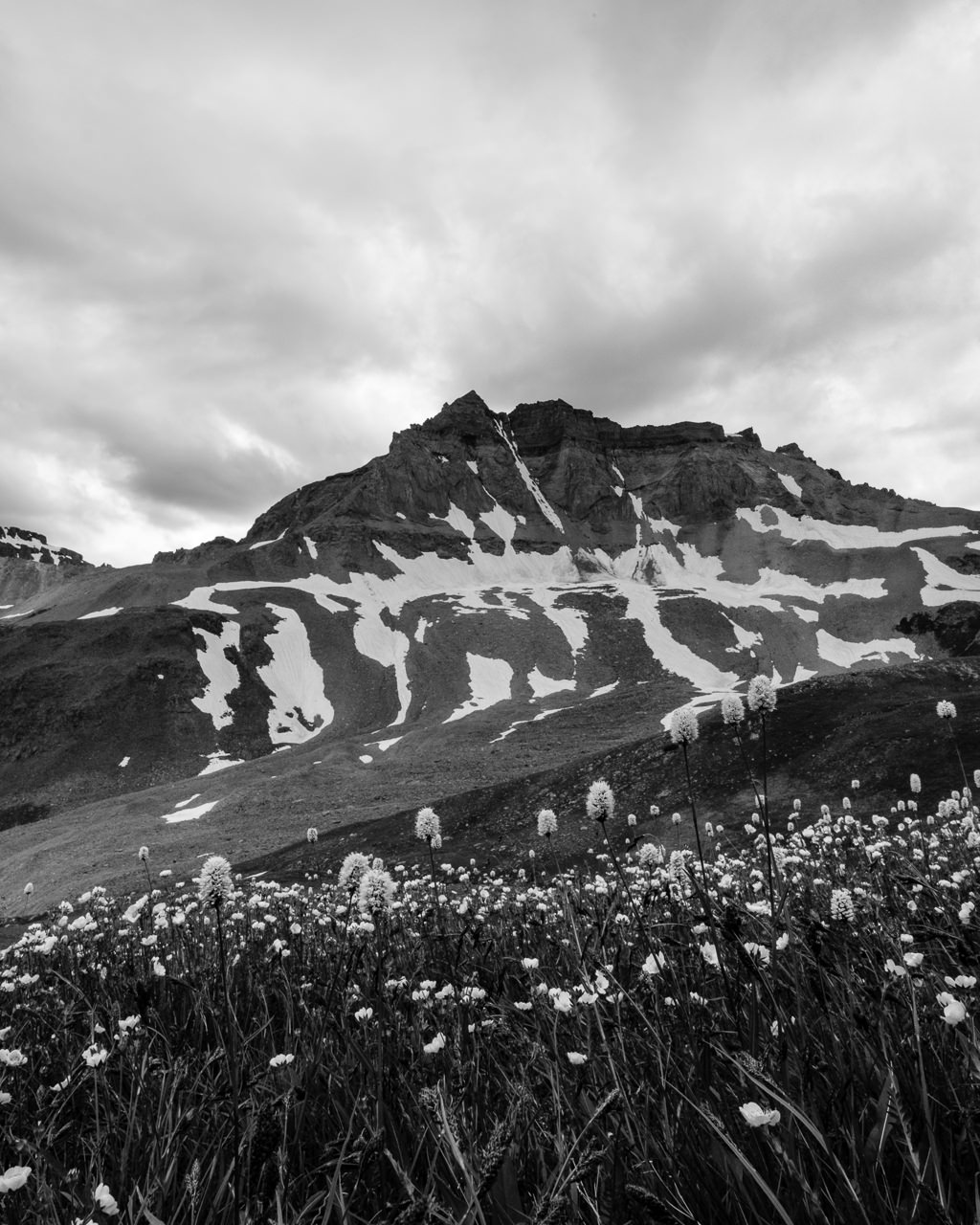 Day 237 - 365 Day B&W Photo Challenge - Wildflowers leading up to Mt. Sneffels - X-T3, XF14mm f/2.8, Acros R Film Simulation