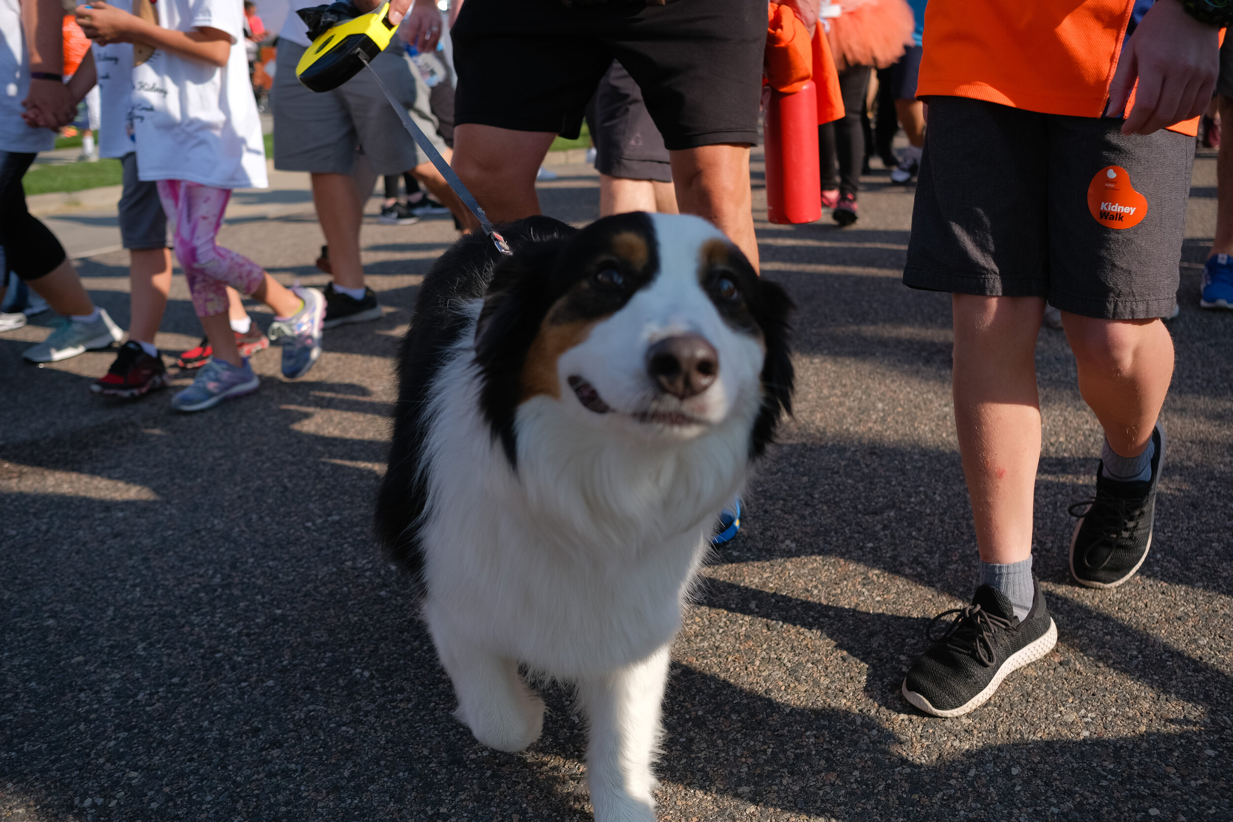 Denver Kidney Walk-97.jpg