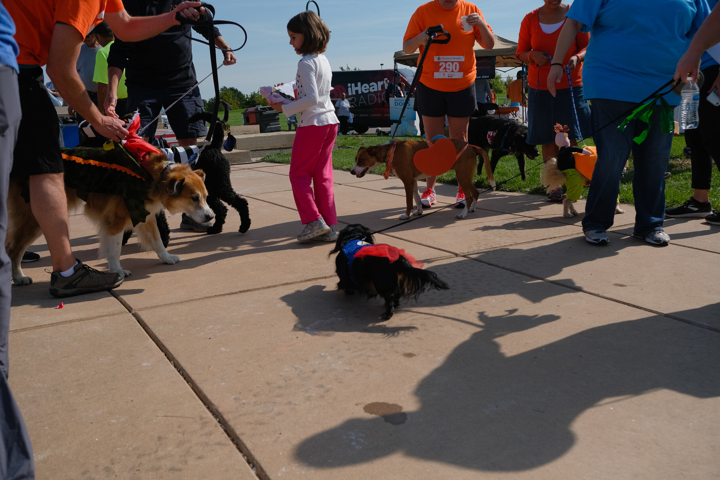 Denver Kidney Walk-224.jpg