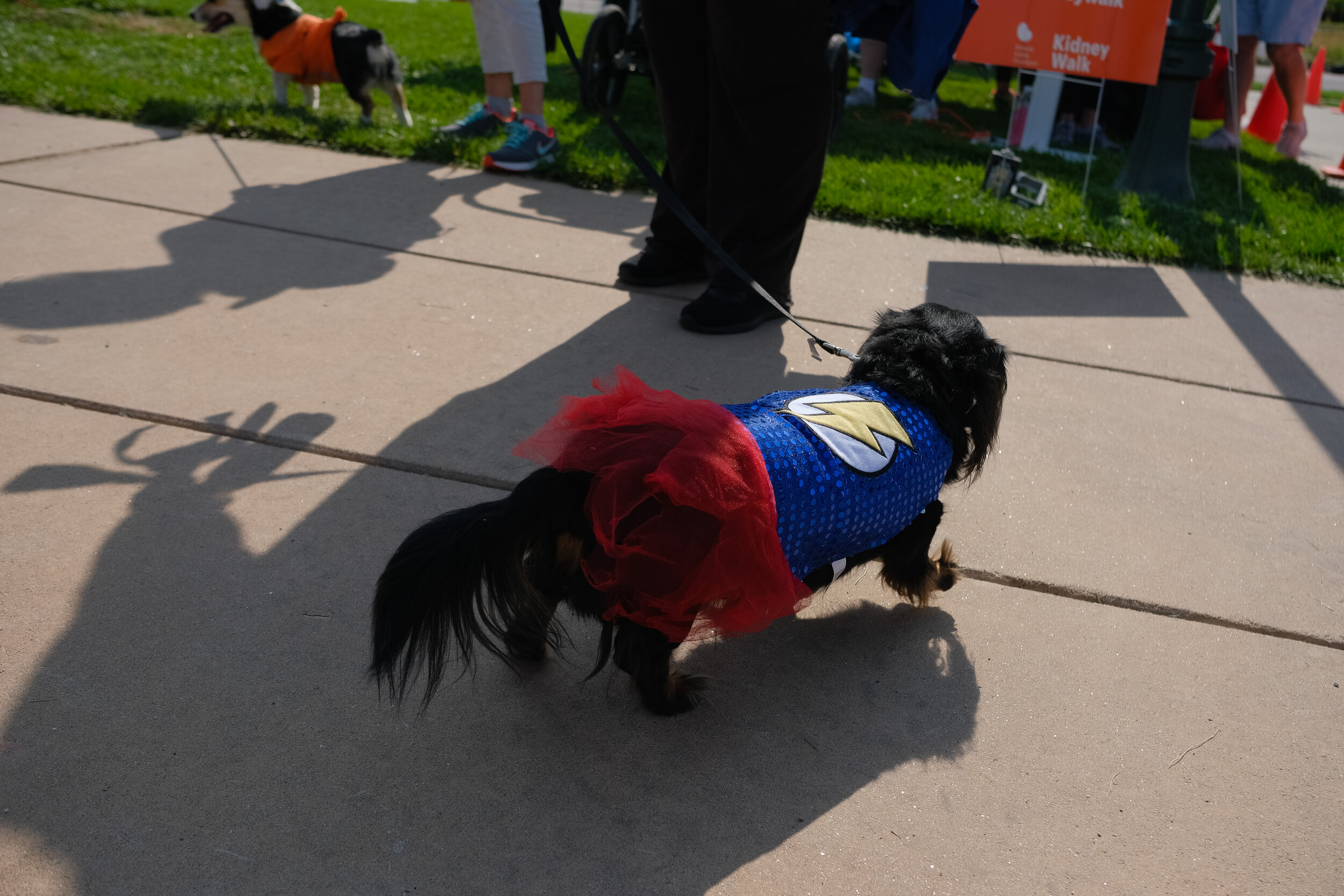 Denver Kidney Walk-226.jpg