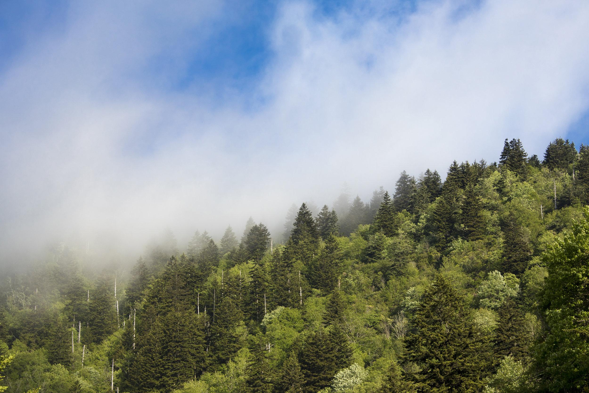 smoky-mountains-hiking.jpeg