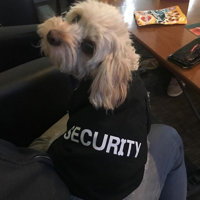 Evening all! We have added security on tonight. Please be prepared to show ID if barked at 🐶🐶 #security #dogsofinstagram #happyfriday