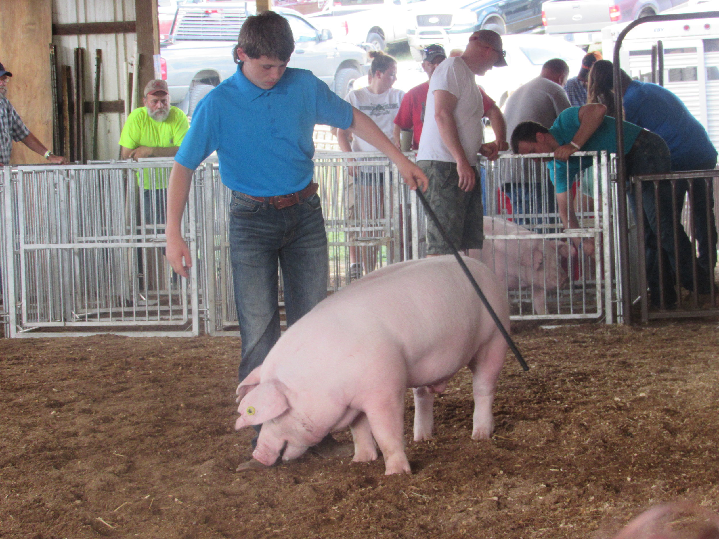 WEDNESDAY - SEPTEMBER 4 - 6:00 pm…………….Judging Market Swine followed by4-H & FFA Showmanship and FittingContest – SA6:00 pm…………….Bill Horner Magic Show - ST7:00 pm…………….DEMOLITION DERBY – Grandstand7:30 pm……………Bill Podish - ST