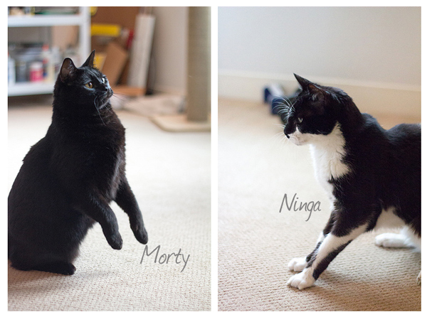 Morty-Ninga.jpg