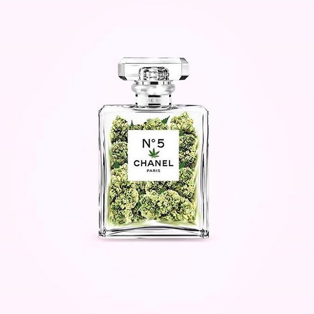 The only fragrance a woman needs. 💡 @tommasobordonaro