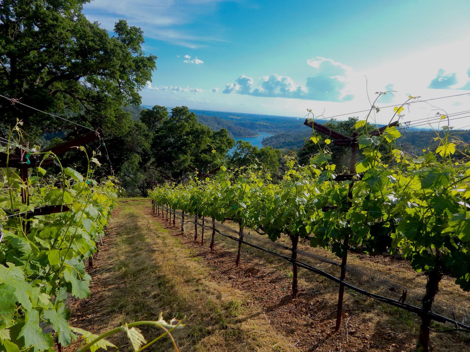 Vineyard-8.jpg