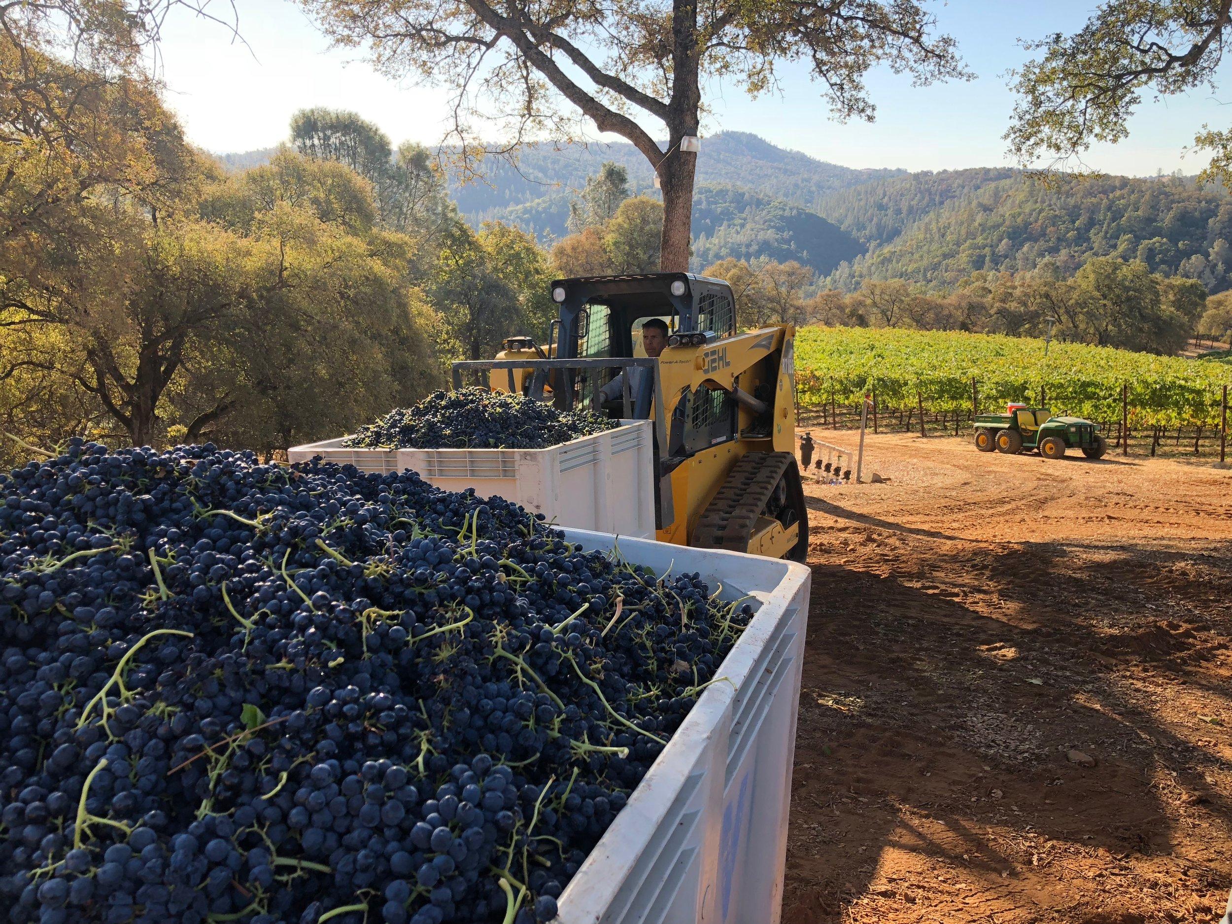 Harvest in full swing!