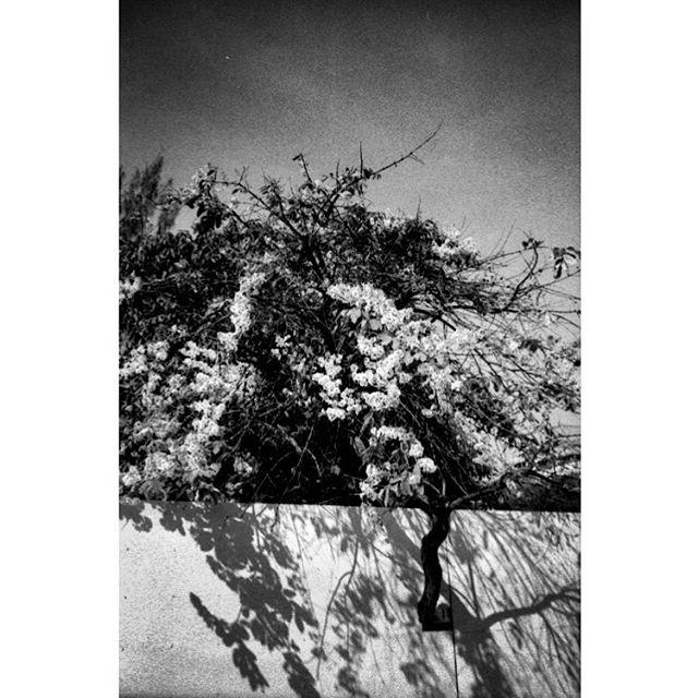 It's all about R-E-S-P-E-C-T.  Kyoto, Japan. . . . . . #rip #arethafranklin #kyoto #japan #asia #themiddlegrey #andthelastwaves #deathb4digital #instarevelat #back2thebase #leicam2 #40cron #35mmfilm #filmphotography #filmsnotdead #filmphotographic #buyfilmnotmegapixels #ilford #ilfordhp5
