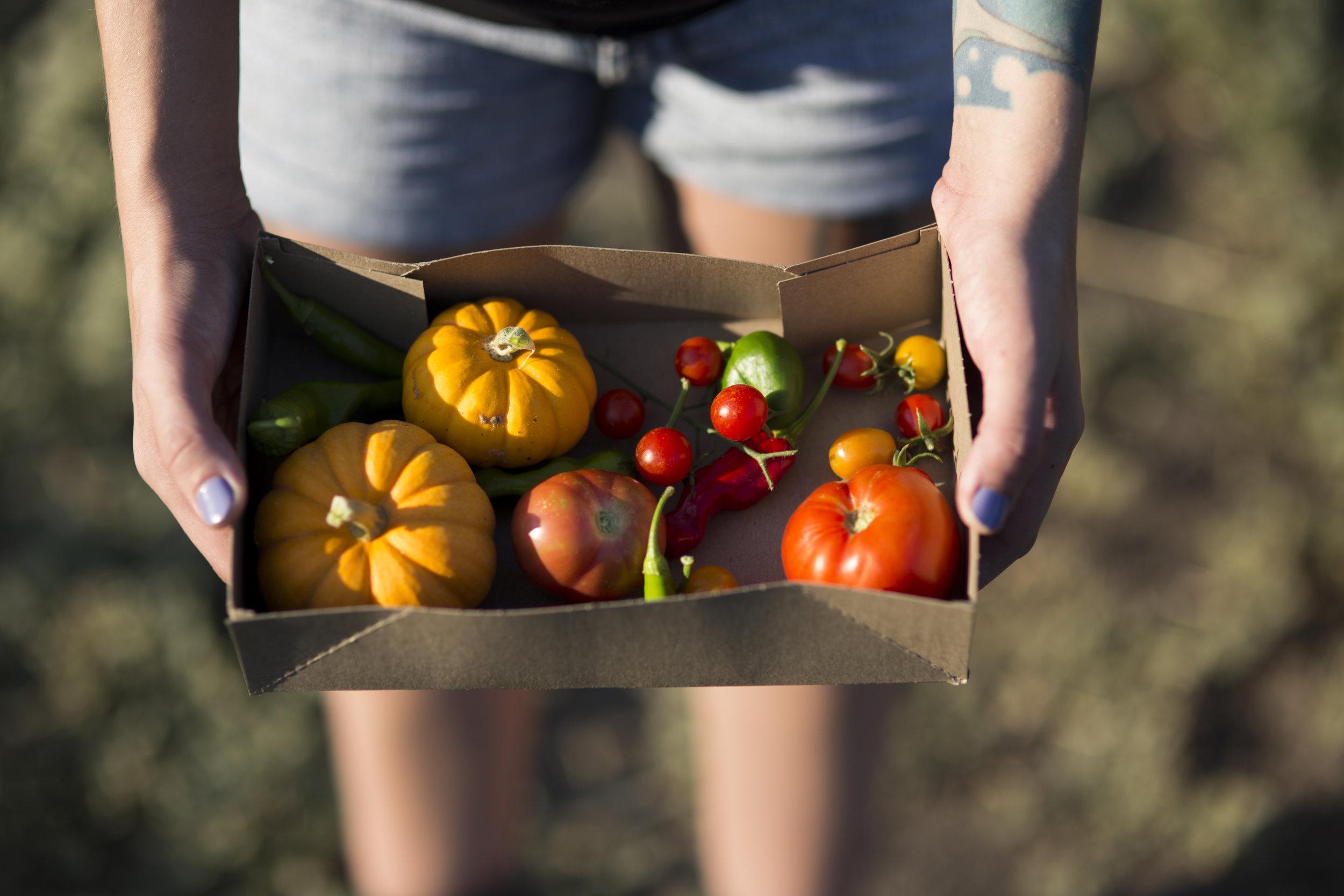 SFF Tomatoes and veggies.jpg