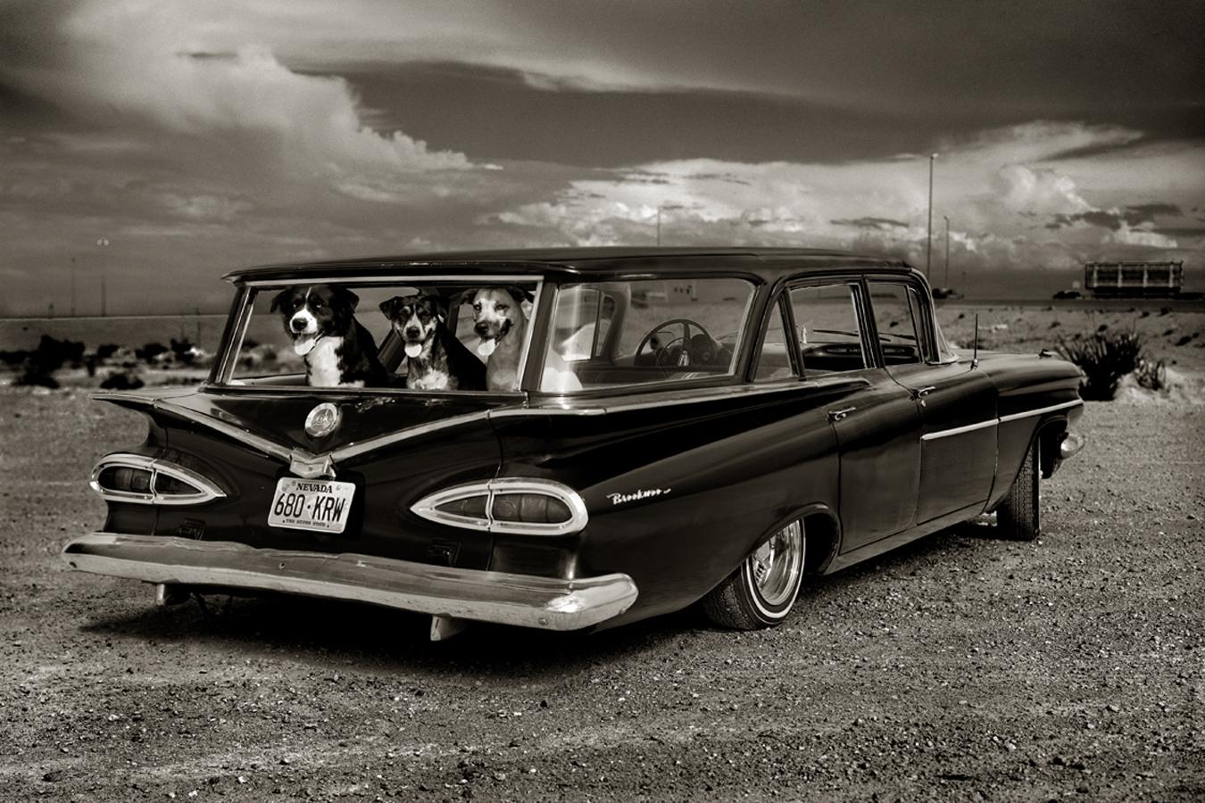 albert watson dogs in car.jpg