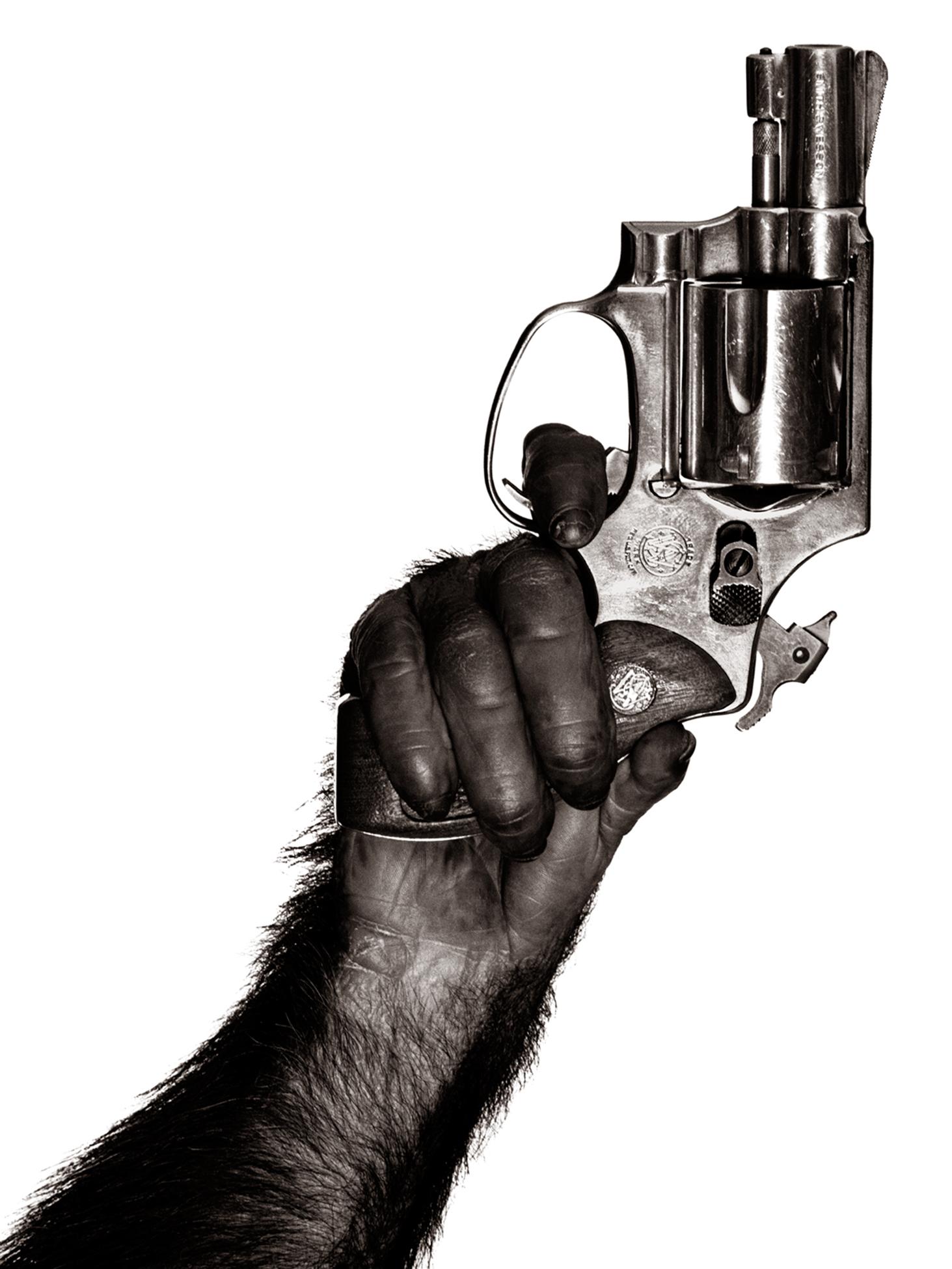 Monkey with gun by Albert Watson   Price on request