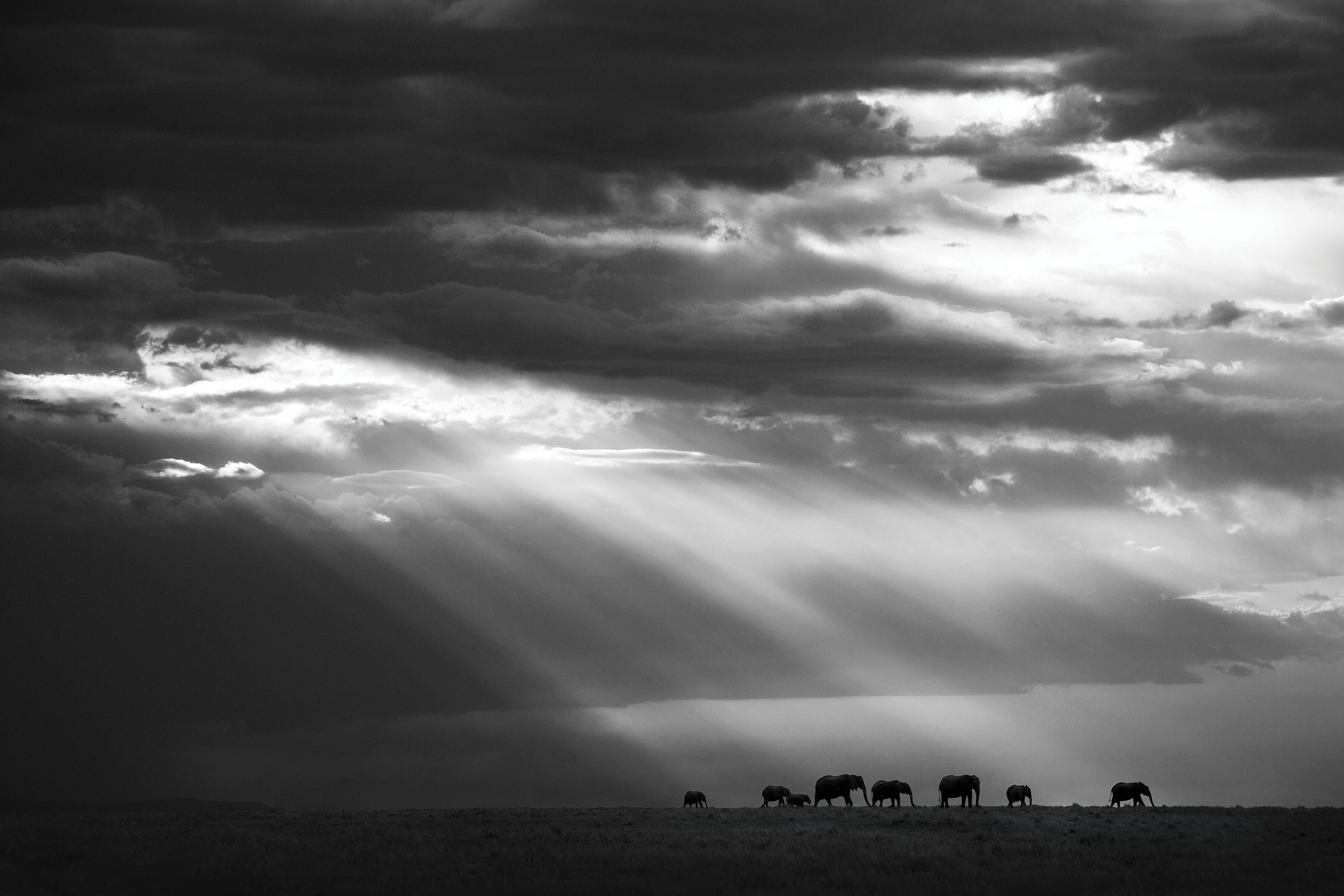 Follow The Sun, Masai Mara, Kenya, 2017  By Björn Persson  Available in 6 different sizes, Price from 10.000 SEK