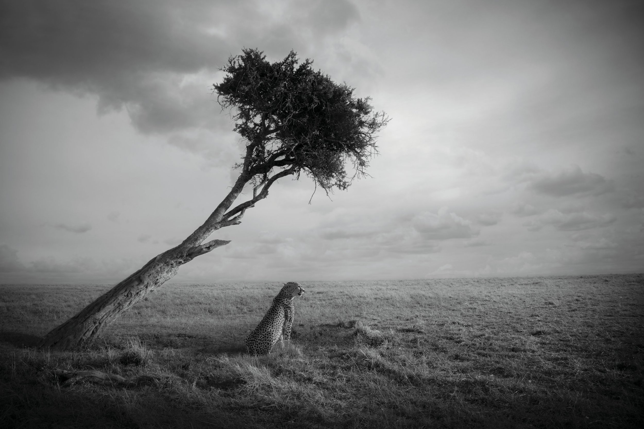 Nirvana, Masai Mara, Kenya, 2017  By Björn Persson  Available in 6 different sizes, Price from 10.000 SEK