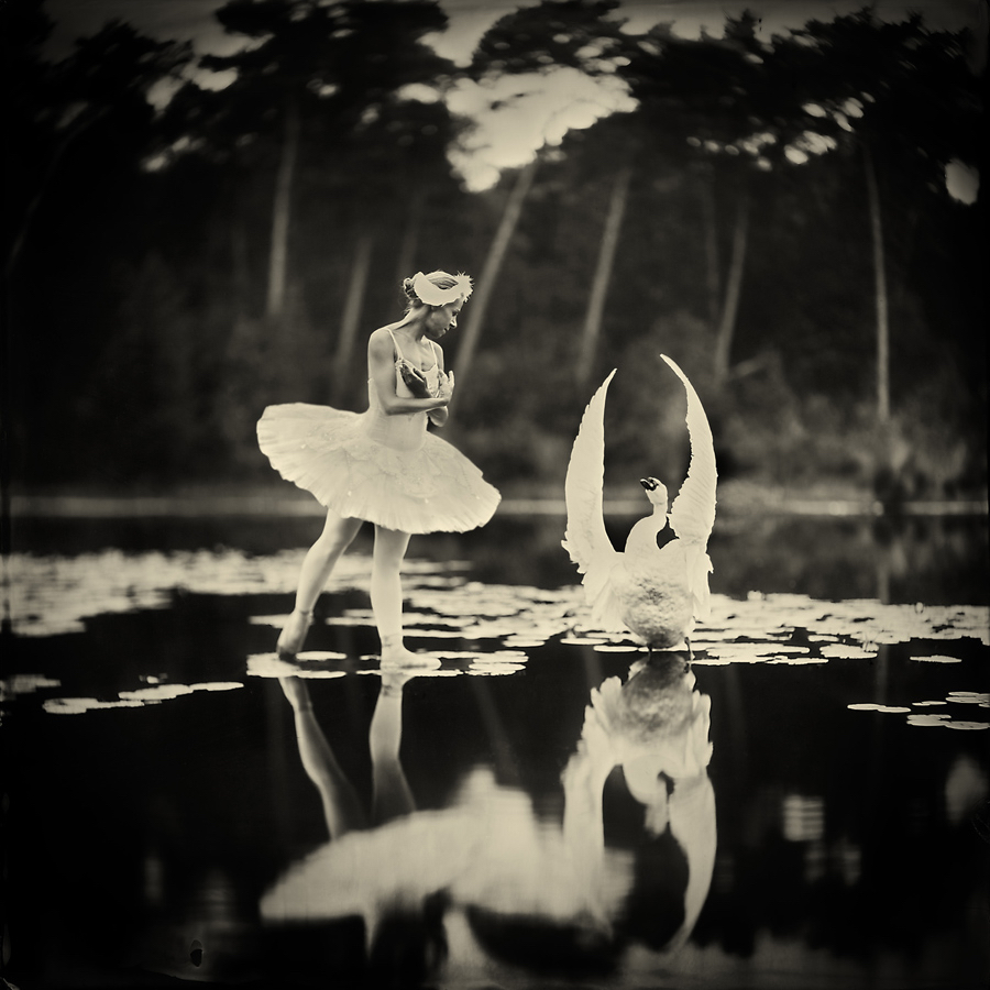 Swan Lake by Alex Timmermans  Available in different sizes. Price on request.