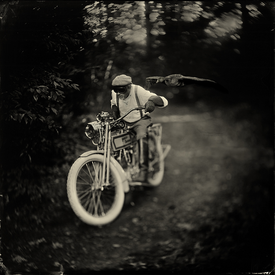 Born to be wild by Alex Timmermans  Available in different sizes. Price on request.
