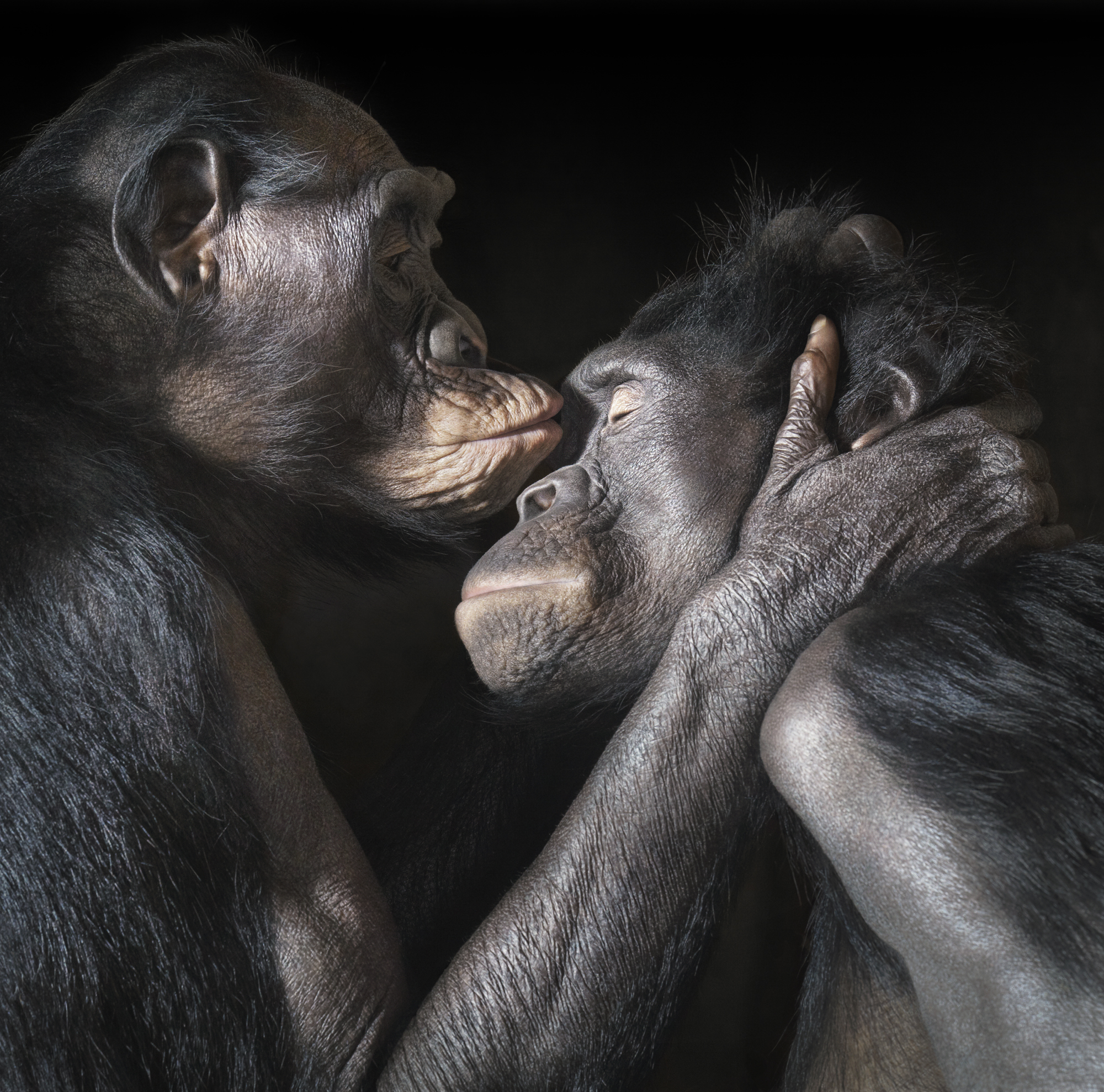 Kissing by Tim Flach