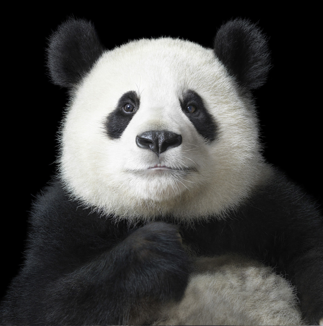 Ya Yun by Tim Flach