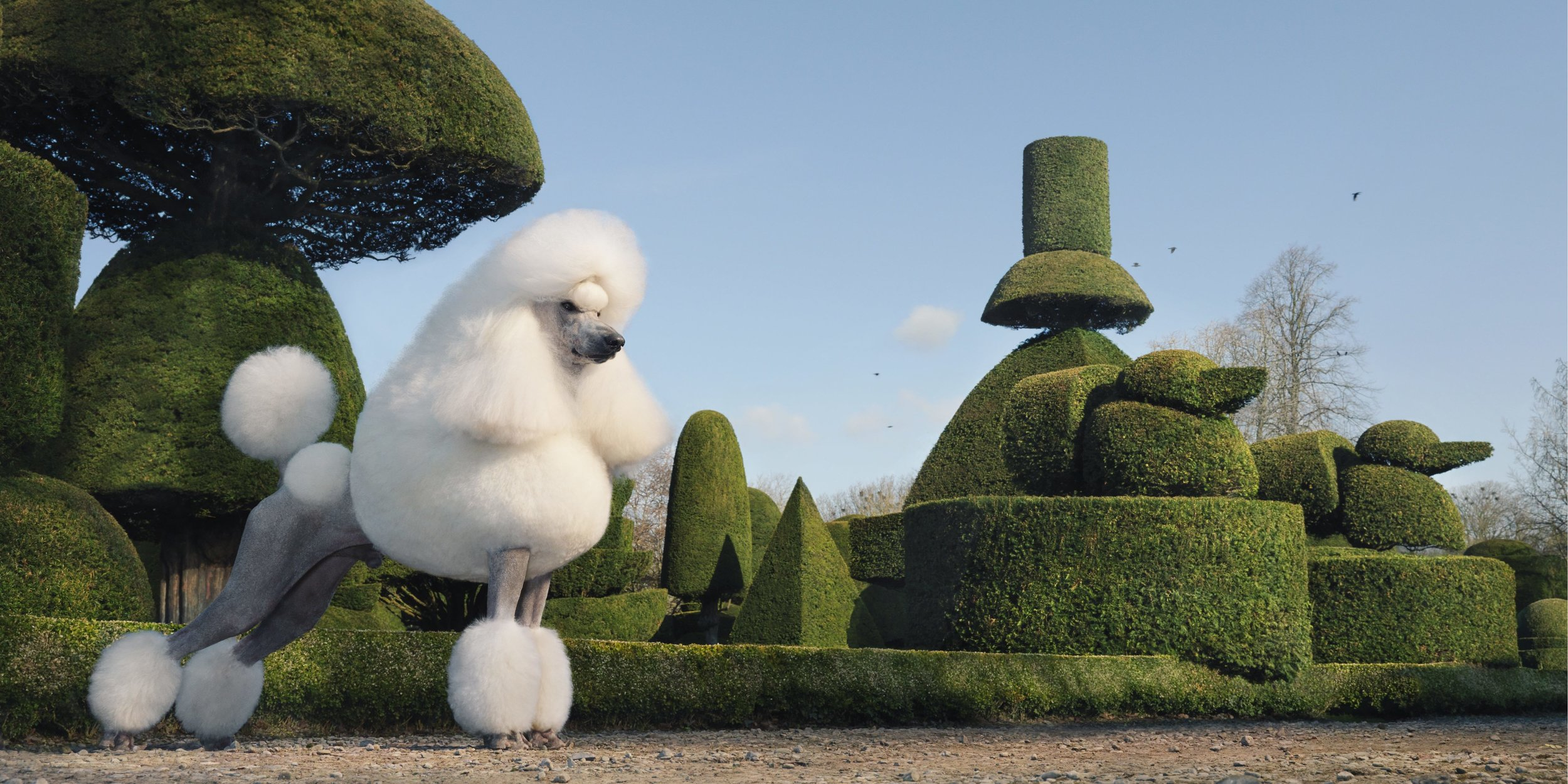 Topiary by Tim Flach