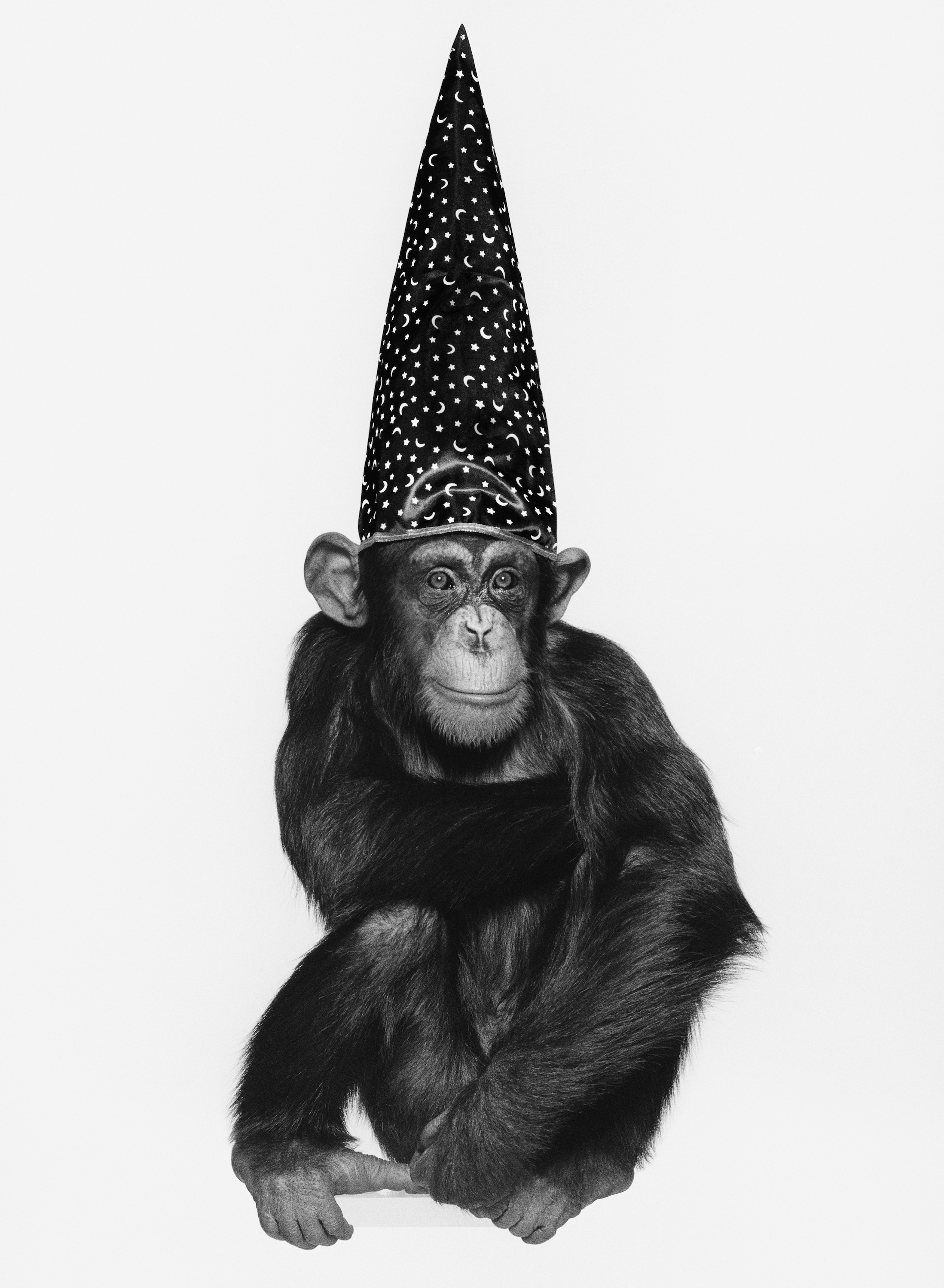 Monkey with hat by Albert Watson  Edition 10, Silver Gelatin, 51x61cms,  Edition 10 (archival pigment), 107x142cms,