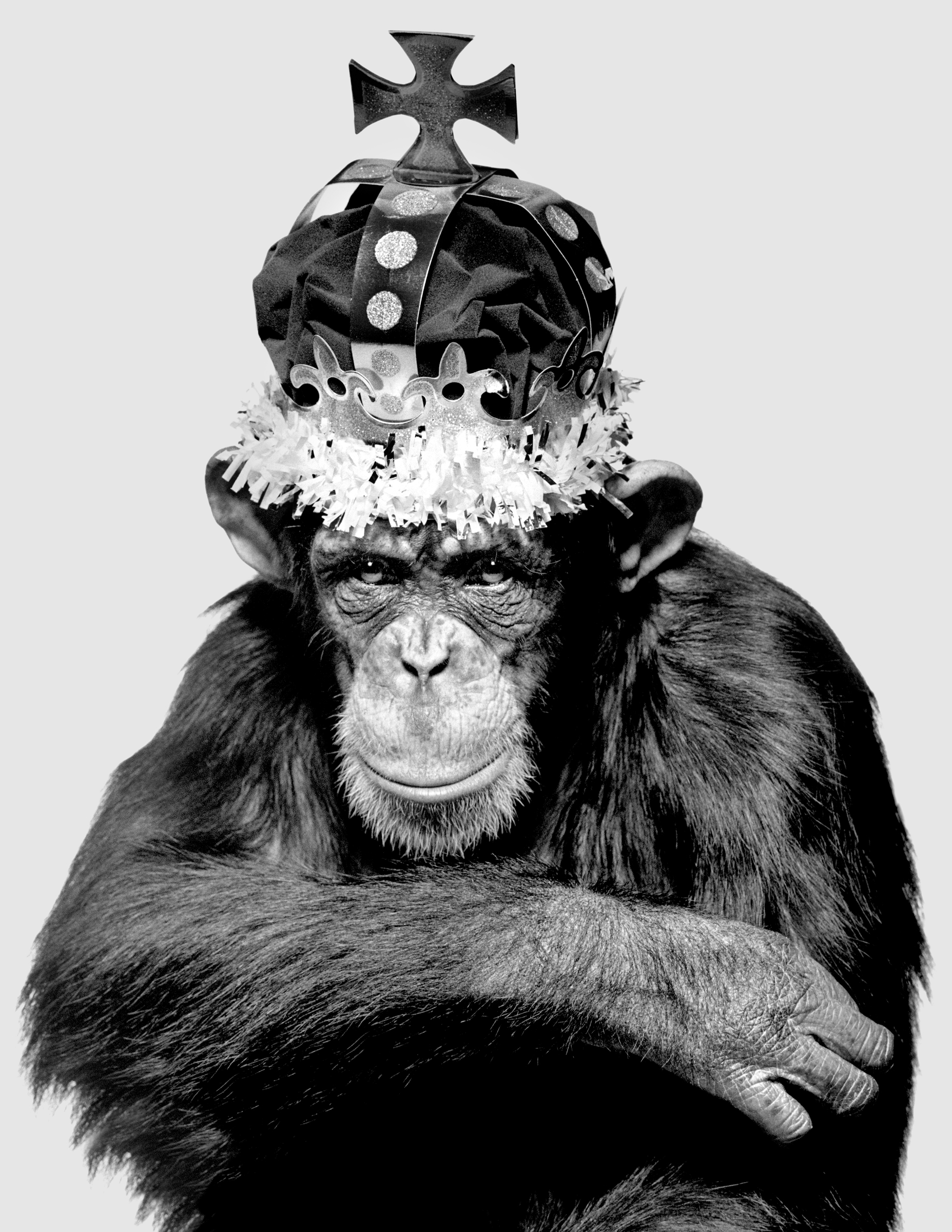 """King Casey, New York City by Albert Watson 1992:""""  Edition 25, 61x76cm  Edition 10, 107x142cm (only three left)"""