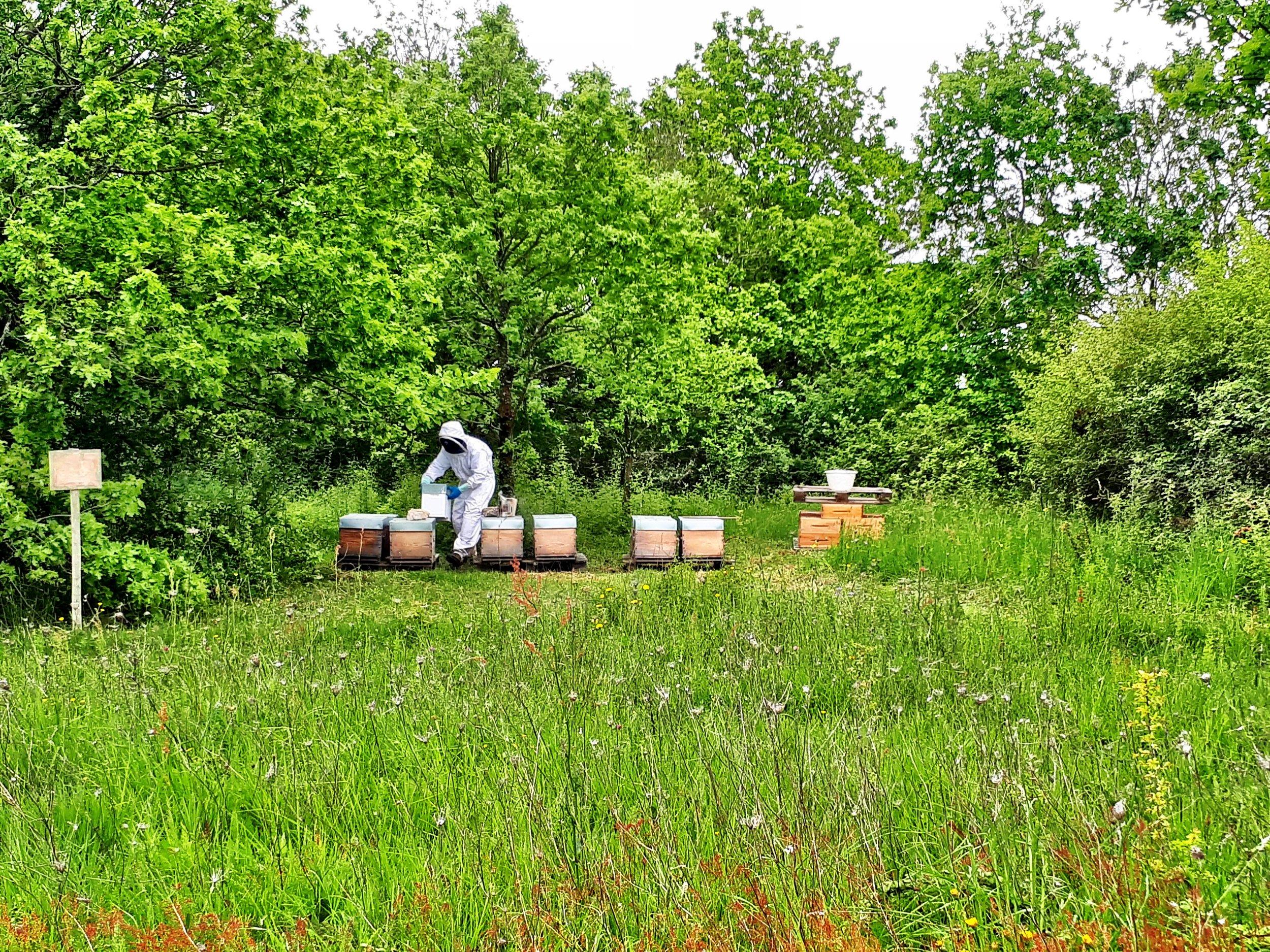 Vignes ruches abeilles thierry michon