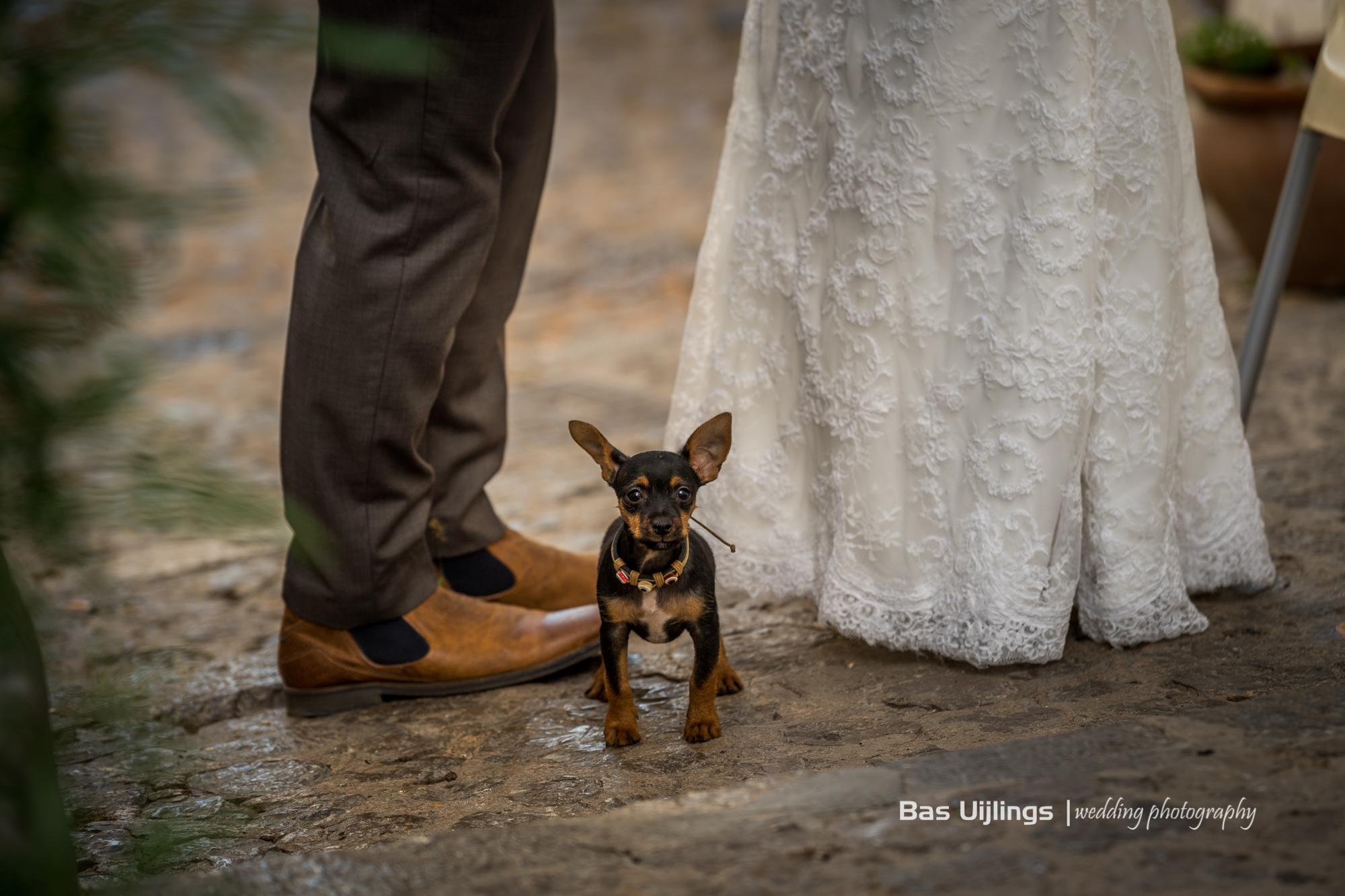 Dit hondje… so cute!