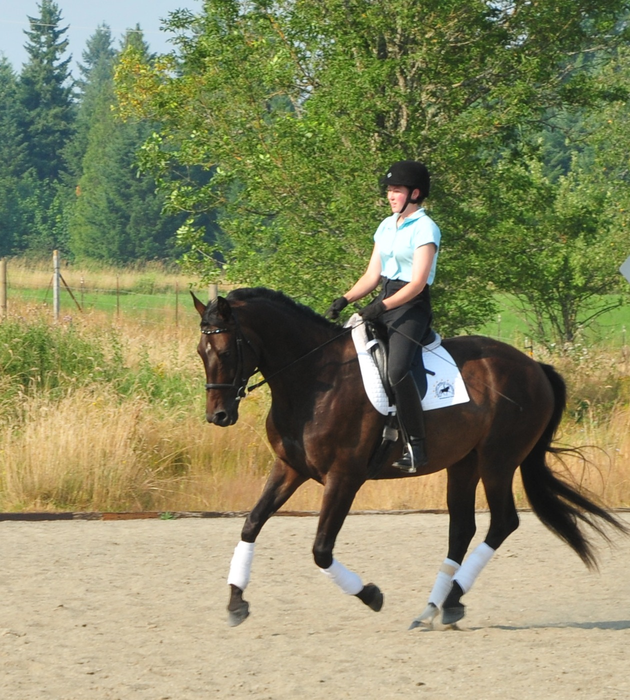 """A solid, balanced position and correct basics can create quite a happy picture. This horse pictured above is soft through his back with a relaxed expression, swinging tail, and is a joy to ride!"" - Allison"