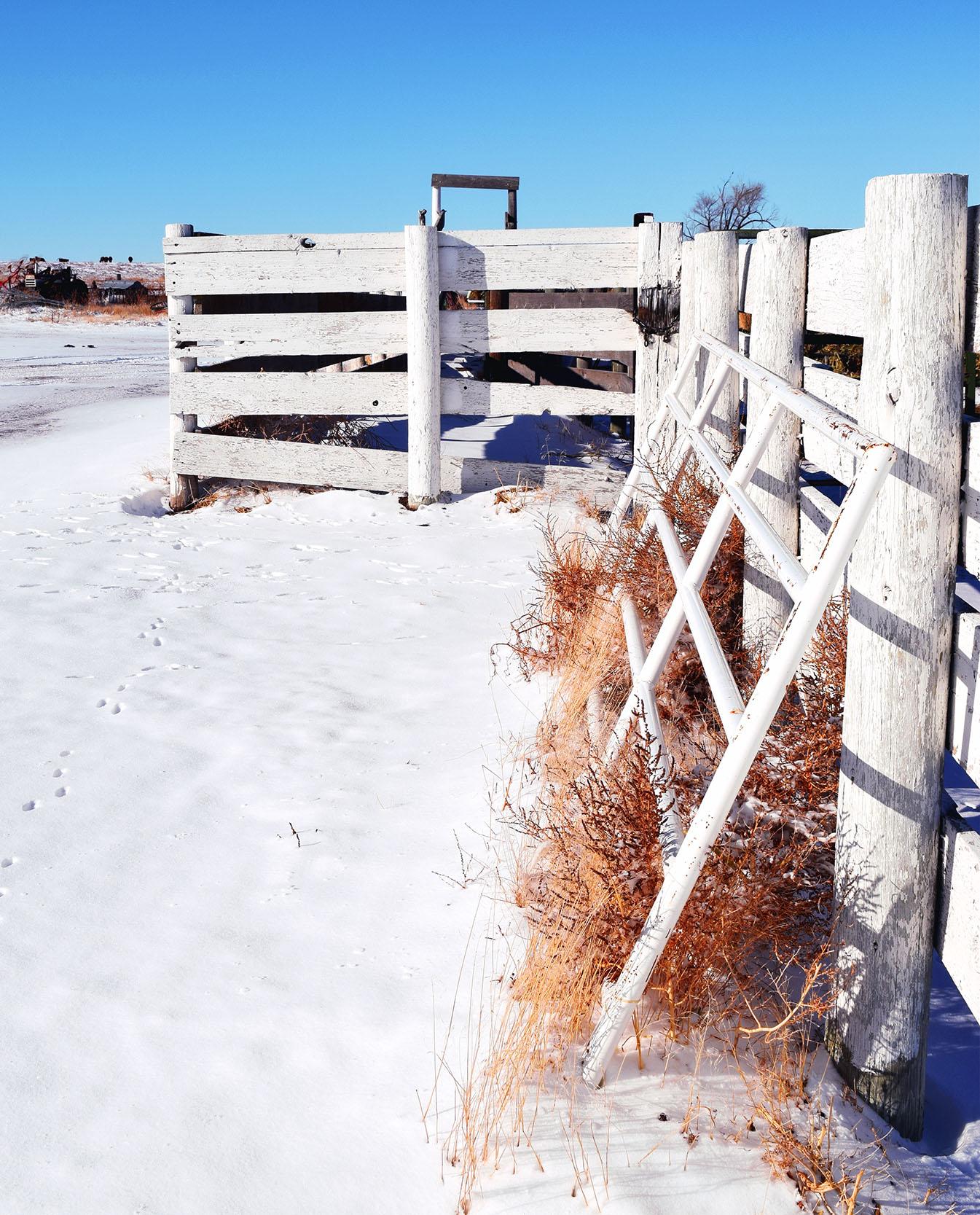 white_fence.jpg