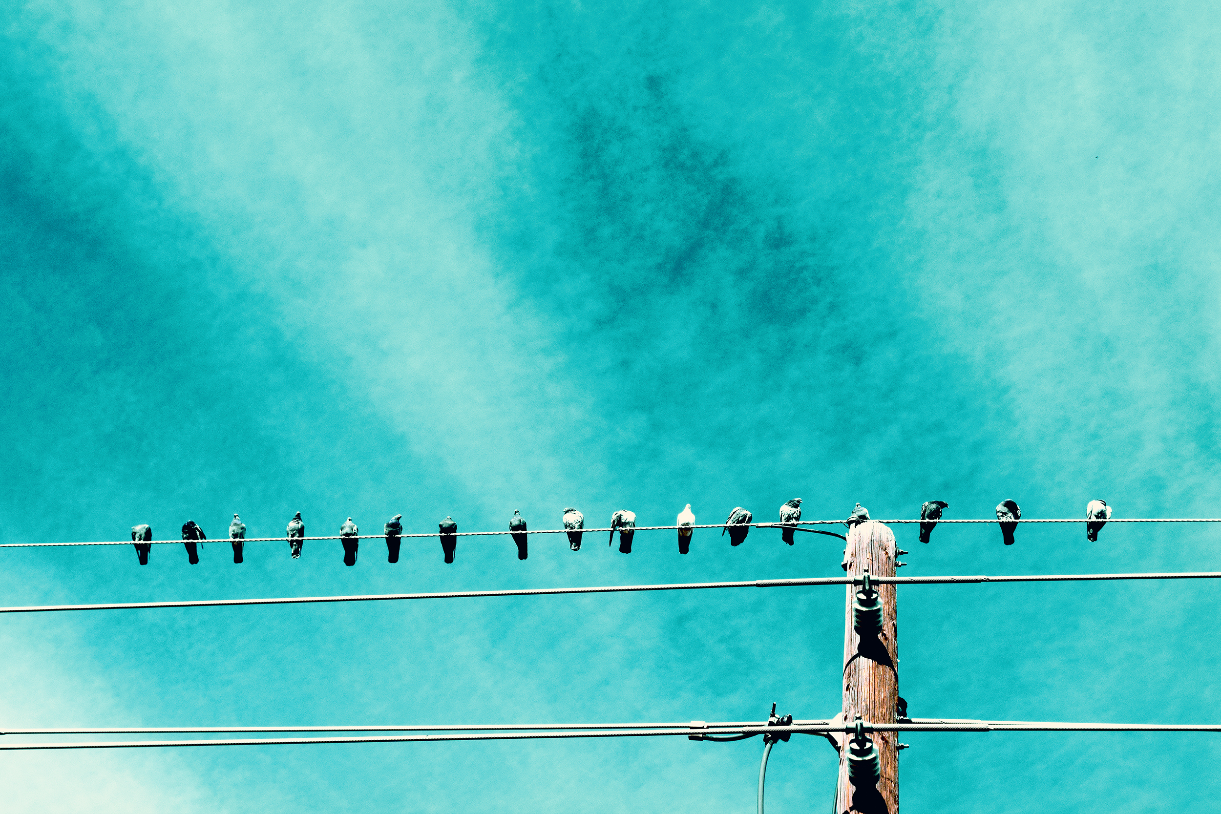 birds_wire_horz.jpg