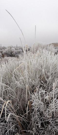 Tsukimi_Frozen_Grasses.png