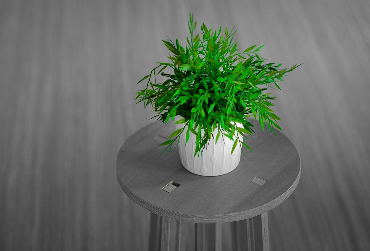 plant-2971483_1280.jpg