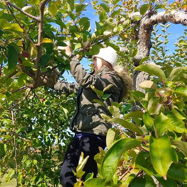 I had more fun picking apples at the end of the season than I did during the middle of September. I loved the challenge of finding the best apples left! I'll definitely do it again next year. I'm so excited to make all of the apple recipes that I possibly can! 🍎