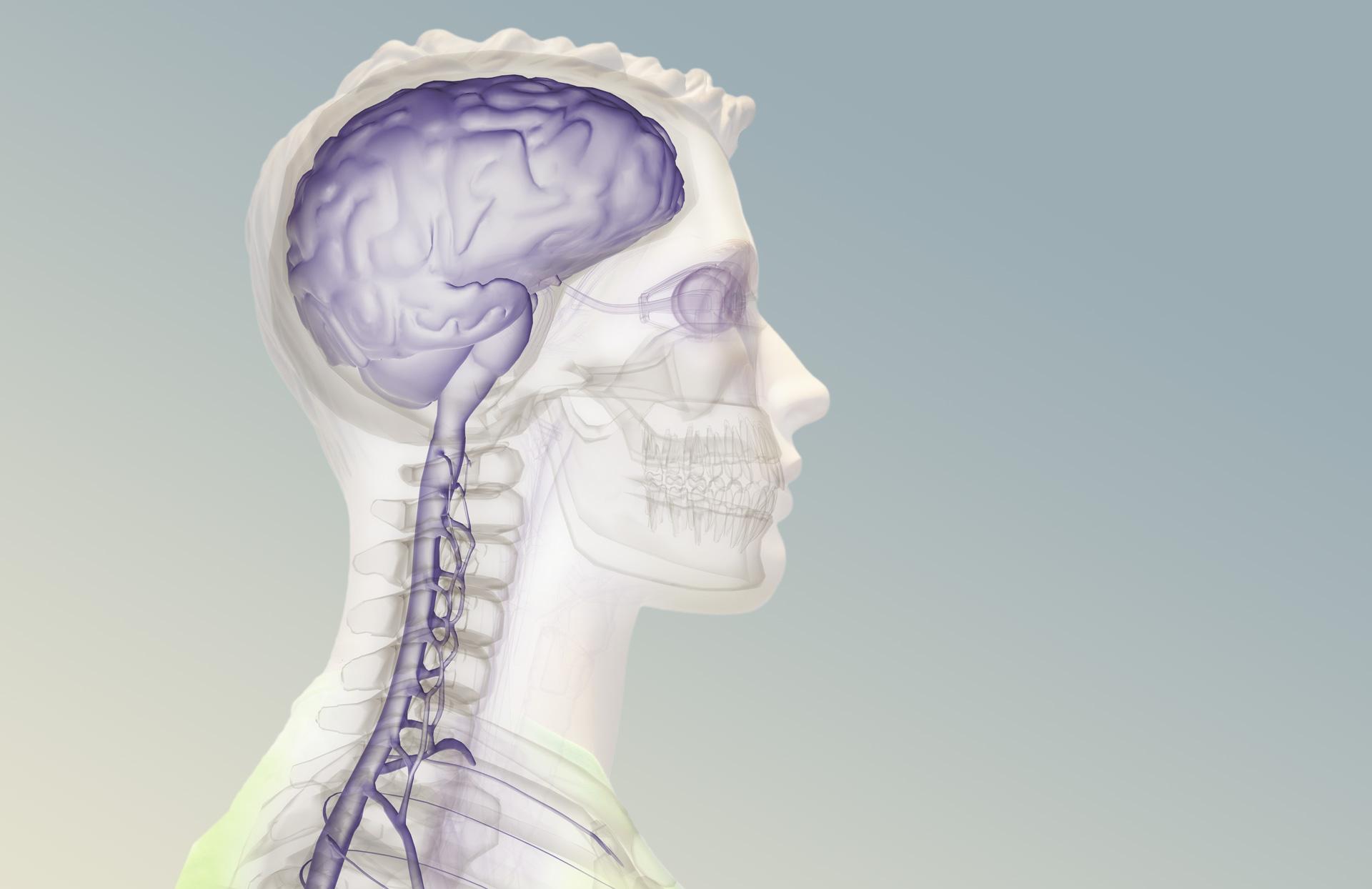 Spinal_XRay.jpg