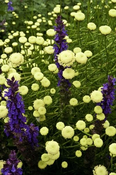 flowers  d178-11dm.jpg